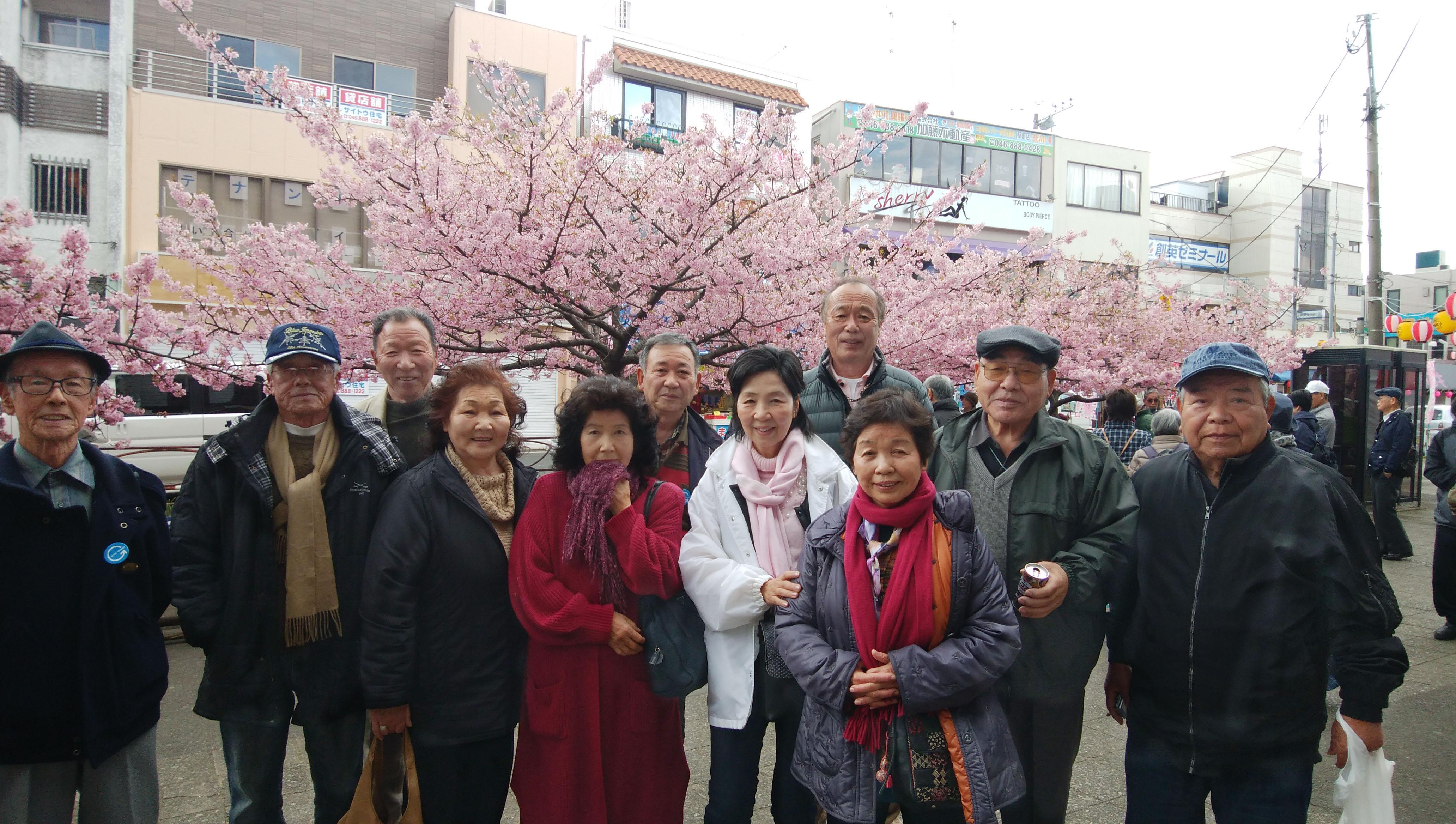 三浦海岸桜まつりと三浦半島を巡るツアー催行!