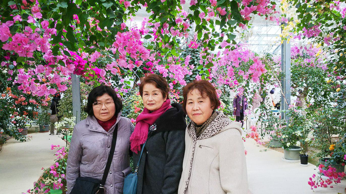 長崎  平戸温泉と日本最大級のブーゲンビリアツアー催行!