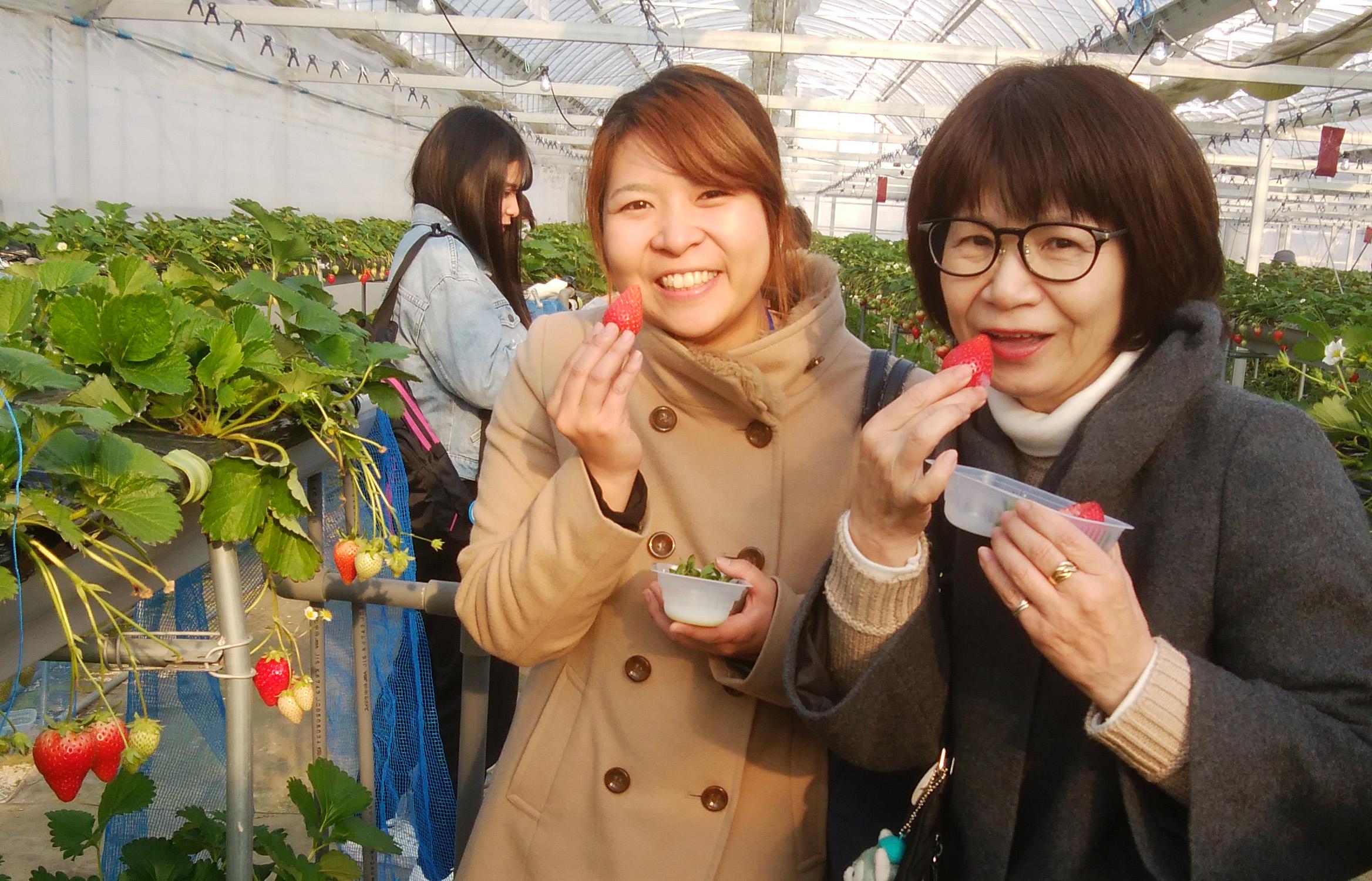 静岡 春の伊豆を満喫ツアー催行!